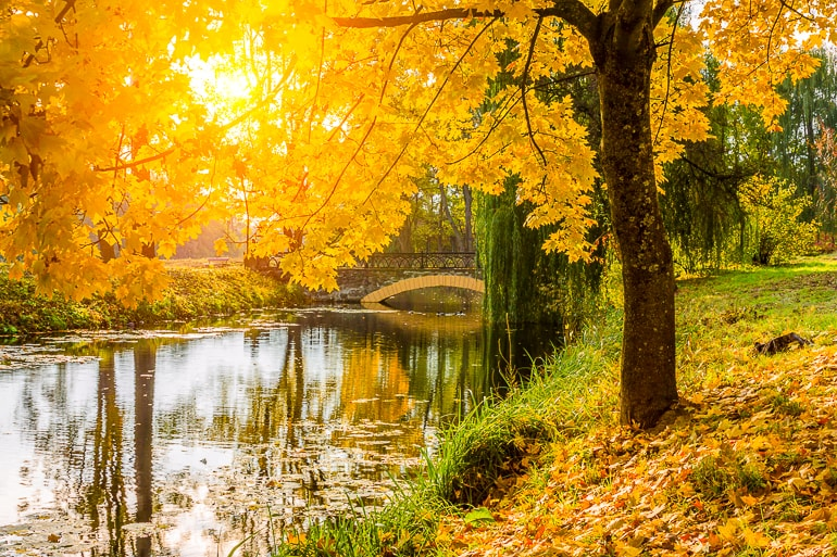 yellow leaves of fall colors with path and riverbank mantras for anxiety
