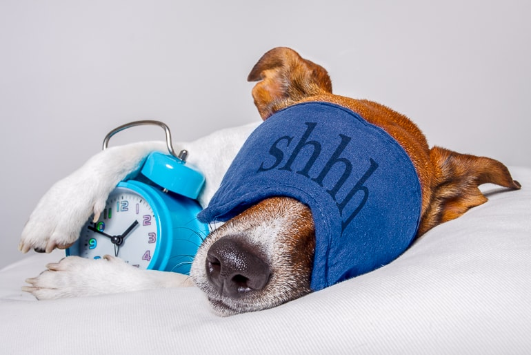 Dog with sleeping mask and alarm clock laying on bed