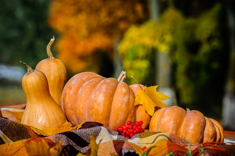 pumpkins with leaves and blanket in front in autumn