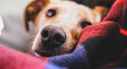7 Of The Best Dog Blankets That Your Dog Will Absolutely Love