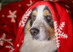 9 Of The Most Festive Dog Christmas Sweaters For Your Furry Friend