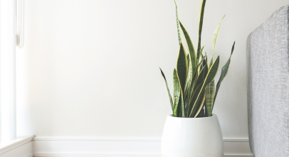 10 Of The Best Indoor Plants That You Can't Kill Easily