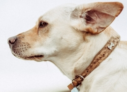 7 Leather Dog Collars To Style-Up Your Best Doggie Friend